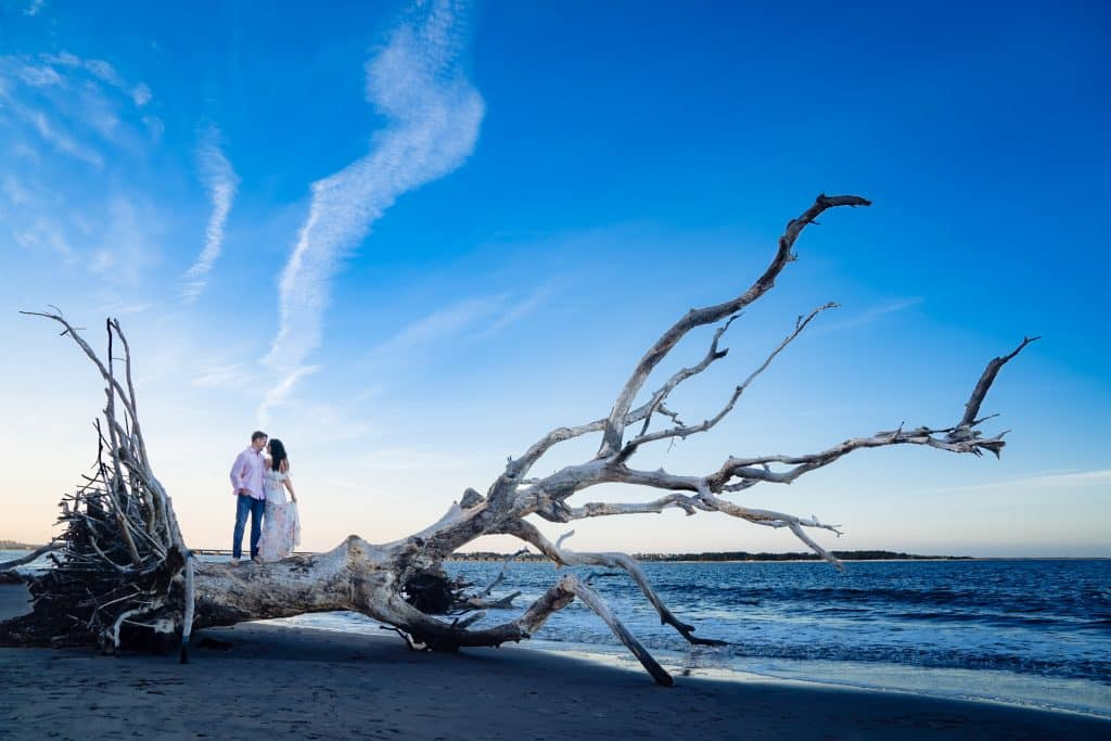 Engagment session in big talbot boneyard beach with blue skies on dead tree