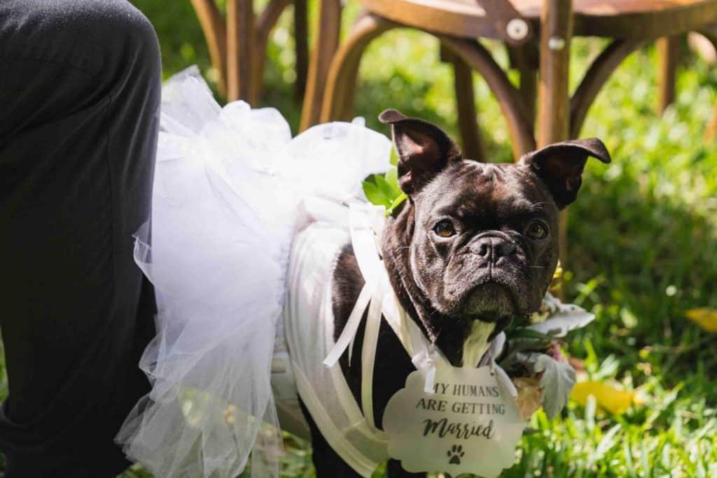 Dog at wedding ceremony at Brooke and Josh's New Smyrna Beach Wedding
